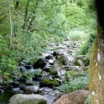 A nearby stream that lulled us to sleep at night
