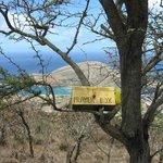 Koko head climb- wishes tree