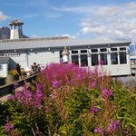 Fireweed at the Seward Boat Harbor