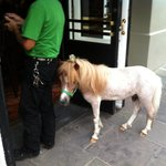 Man walks into a Bar with a horse....Bourbon Street