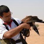 Amazing Falcon trainer