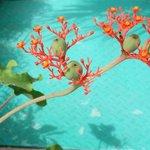 Stunning flora and fauna