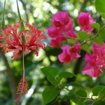 Amazing tropical Flora and Fauna