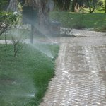 Watering ways and lawn at 09:00 a.m.