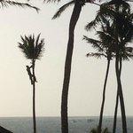 Man Climbing Tall Palm Tree