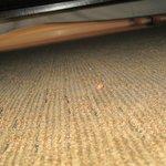 crumbs under the bed