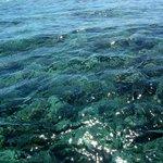 air laut yang jernih