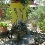 Yucca fountain