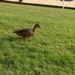Morning visitor!