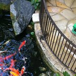Koi pond by the staircase