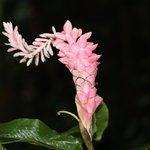 Flora is in abundance