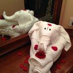 Vijay's Amazing Towel Elephant!