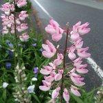 ดอกไม้ริมถนน