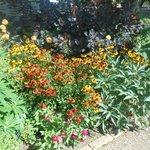 Il colore dei fiori