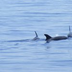 Dolphins on the Cruise