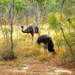 Visit of Emus