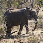 Een olifant passeert onze kamer op weg naar de waterput