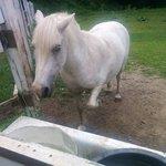 Foto de Inn On The Horse Farm