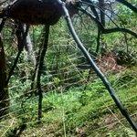 woodland spider !!