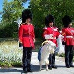 La mascotte du régiment, le bouc Batisse