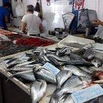 Peixe, muito peixe!