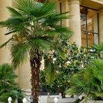 Subtropical plants in the museum's garden