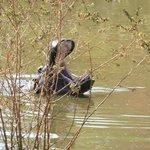 The hippo pool