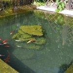 Прудик с рыбками на территории отеля