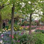 5月上旬の庭