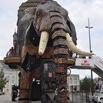 l'élephant