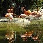Lindos flamingos