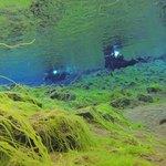 green algae in silfra