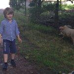 Meeting the piggies!!