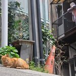 Yanaka has such a cosy feeling to it, and lots of cats!