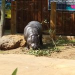 meet the hippo!