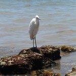 Florida bird - Crane