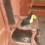 O tucano Mateo no lobby