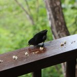 bird visiting us