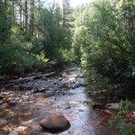 Junction Creek Hike