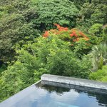 pool, Villa8837