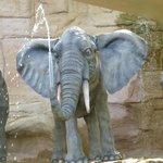 éléphant à Africa Cruise