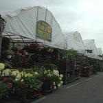 Fresh Flowers Tent