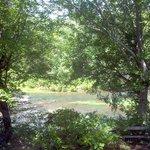 Terrapin Creek in Cherokee County Alabama