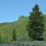 Beautiful nature of the Tetons