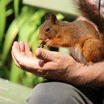 friendly skansen squirrel