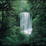 Korokoro Falls, Te Urewera