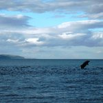 Leaping dolphin!