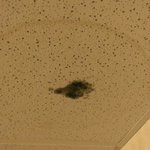 Mold on the ceiling in the hallway