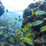 Reef at 7 meters