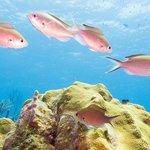 5 meters reef